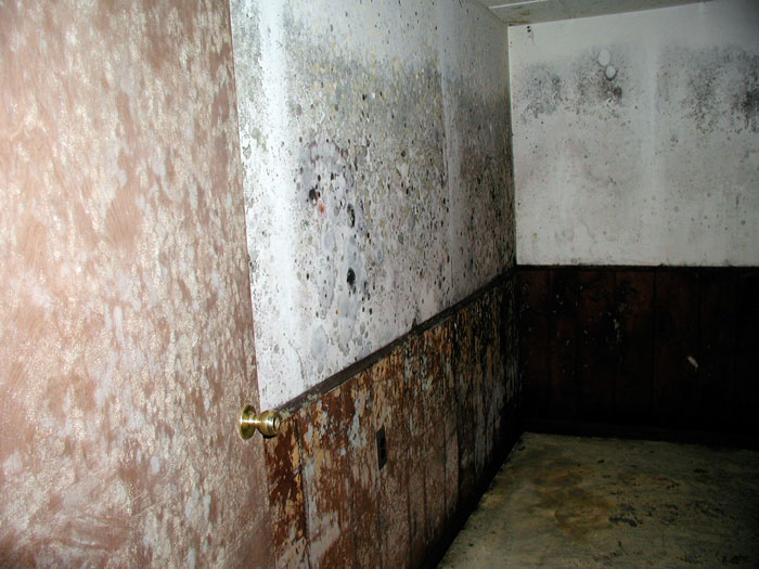 mold growing on a door and on drywall in a humid basement
