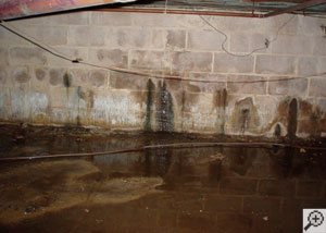 Water seeping through the cracks in a basement wall.