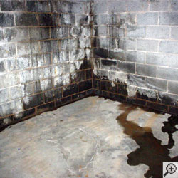 A concrete block basement wall covered in damp spots, water, and efflorescence.