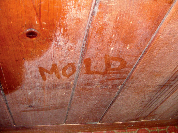 What S Wrong With Your Basement Identify Your Wet