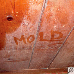 A wood wall covered with white mold, with the word mold written on the wall with someone's finger.