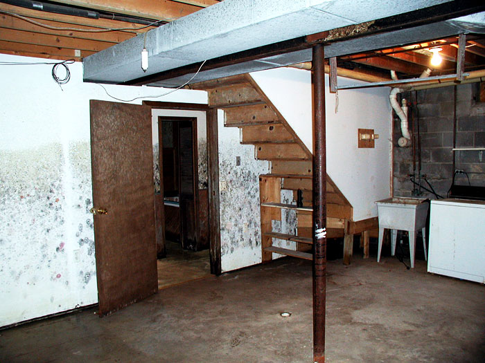 basement mold allergens your health