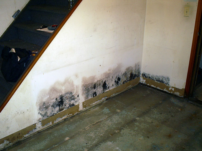 Basement Mold, Allergens, & Your Health