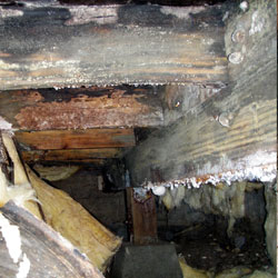 Extensive mold and rot damage in a crawl space