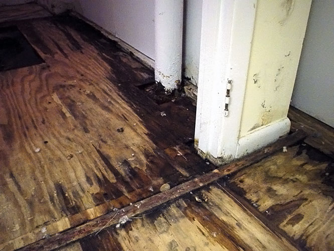 A wood sub floor ruined by basement flooding. & Rotting Basement Floors | Basement Flooring Damaged By Rot Mold ...
