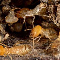 Crawl Space Pests
